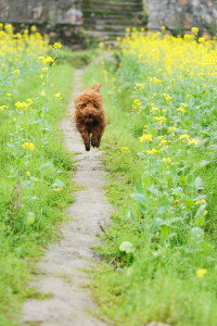 dogs_path