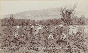 Historically, Boulder County was the site of many orchards, including the Orchard-Grove Fruit Farm (left), once located in north Boulder.
