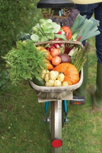 bike-veggies-Martin-Poole_sb10062327aa-001