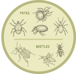 Leaf-Lore-mites-beetles