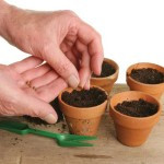 seeds-potting-clay-pots