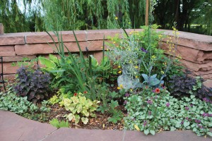 Her shade garden relies on varied leaf textures for interest, including 'Sem False' spirea, which is three-toned in spring with pink, yellow and green leaves; purple sedum; yellow 'Circus' heuchera leaves with purple veins; white dead nettle; orange 'Melton Fire' potentilla; yellow cabbage; purple iris; green-and-yellow-leaved hostas; and pink bleeding hearts.