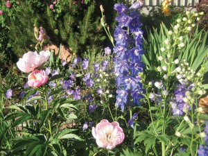 Bruny likes to plant analogous palettes of purples and pinks, exemplified by her peonies, geraniums, delphiniums and roses.