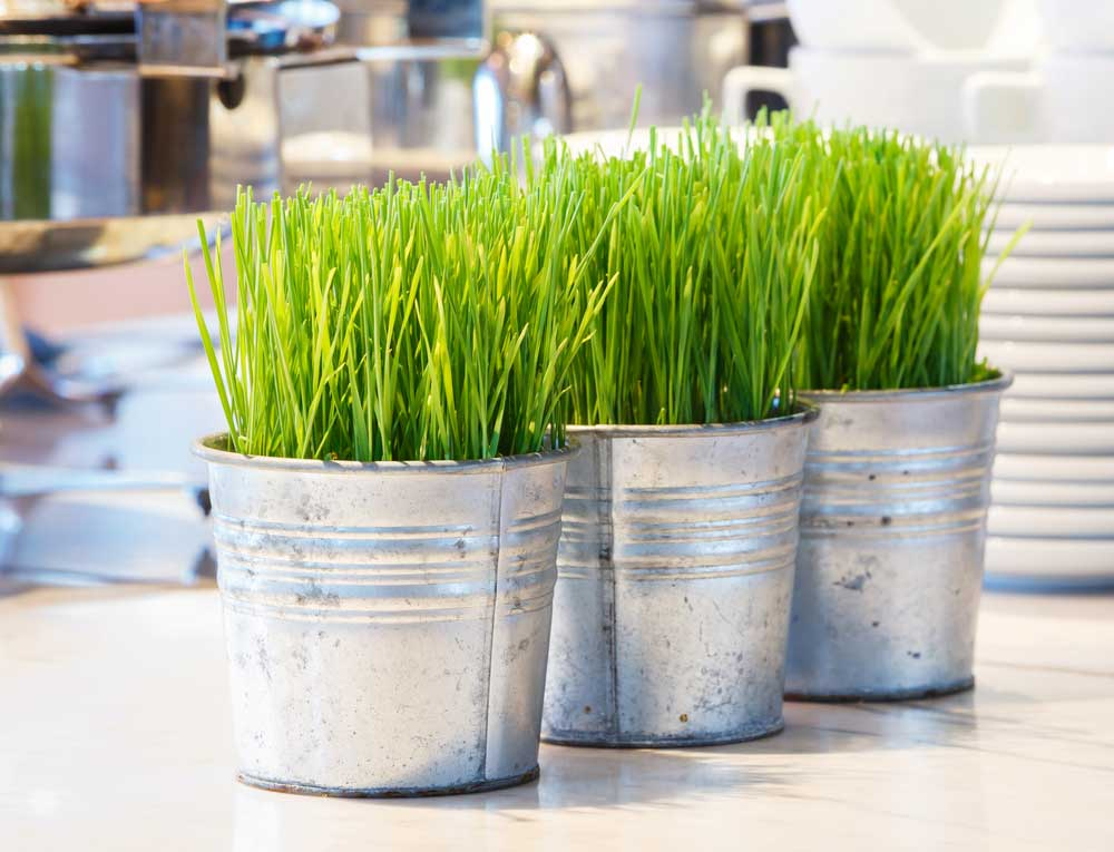 Rebecca\'s Recommendations: The Wheatgrass is Always Greener ...