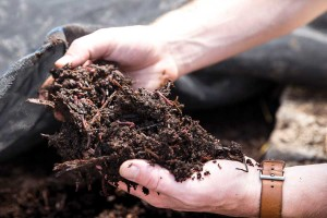Nurturing the soil is a major component of regenerative farming that could turn the tide of global warming by sequestering more carbon in the soil. Photo by Lawrence Miglialo, courtesy The Valhalla Movement.