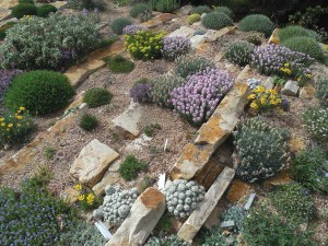 This crevice garden at Denver Botanic Gardens displays bright-pink Persian candytufts, golden-yellow Perky Sue daisies, chartreuse-yellow alpine buckwheat, silvery budded spikethrifts and small white clumps of Escobaria sneedii cactus. Photo by Panayoti Kelaidis