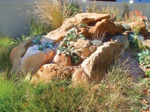 Kenton Seth's crevice garden nurtures native plants like paintbrush and buffalograss. Photo by Eve Reshetnik Brawner.