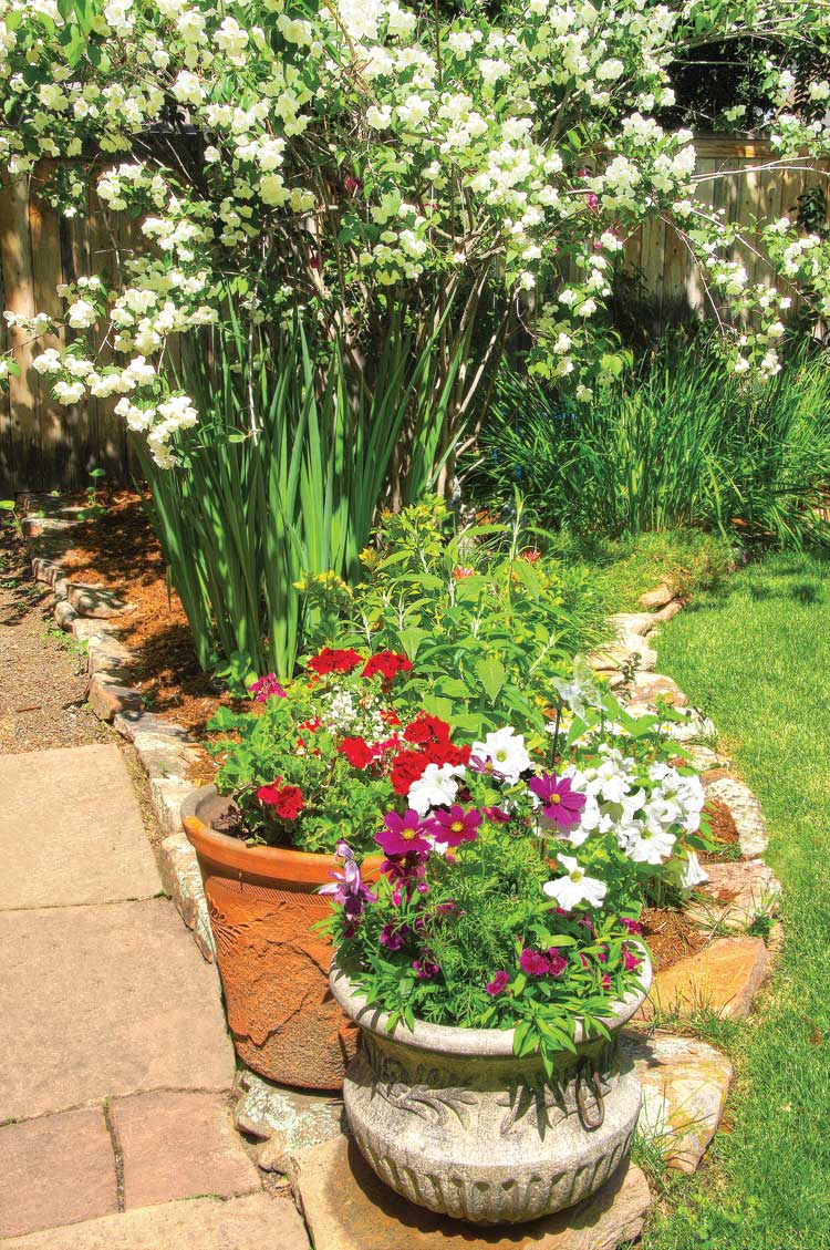 feature garden a mature oasis of greenery and blooms boulder