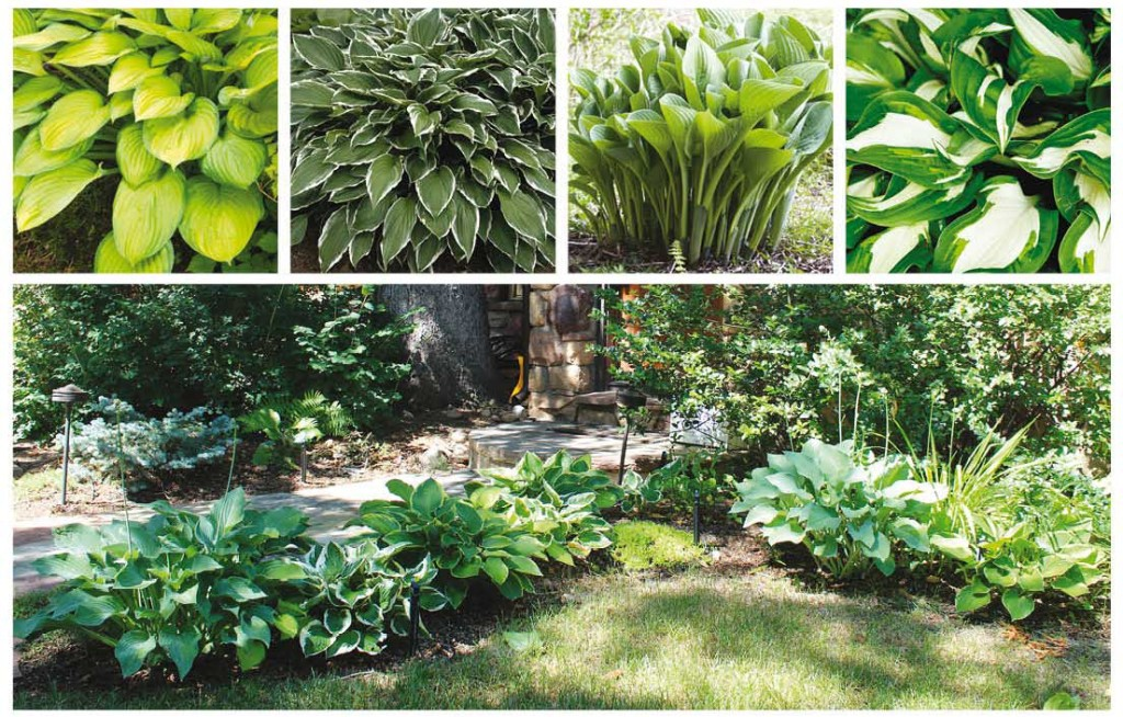 Photos: top row by Shutterstock.com; garden by Mary Lynn Bruny.