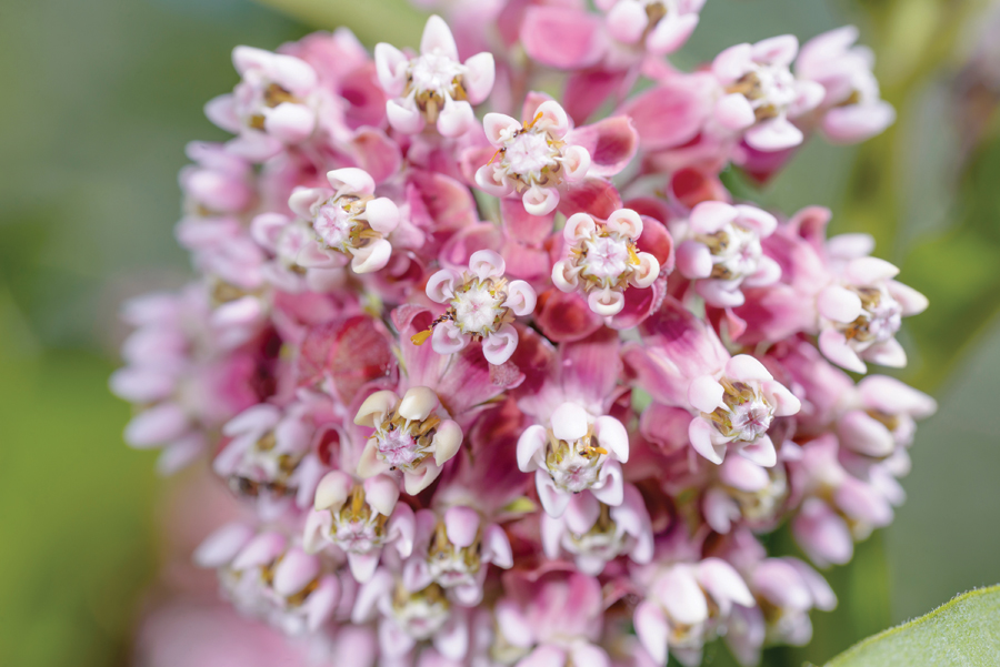 Summer surprises late blooming flowers boulder county home here are my picks for plants that perk up the late summer landscape plant a few in your yard and you too will rejoice come the dog days of summer mightylinksfo