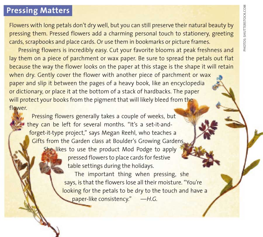 dried-flowers-pressing-matters