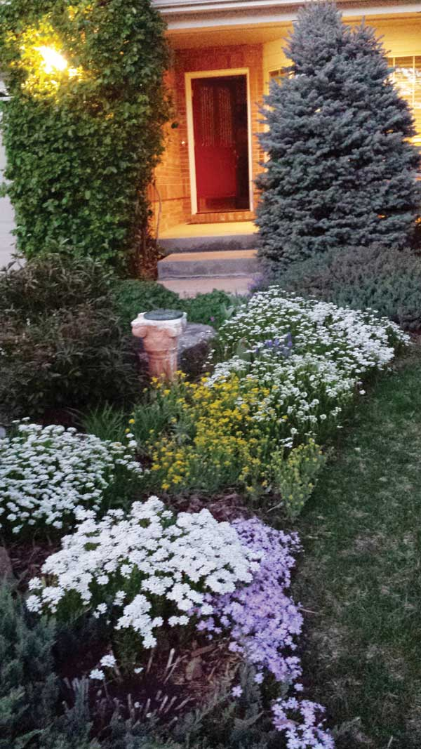 The Walkway Features Color Throughout Season With White Candytuft Creeping Phlox Basket Of Gold And Other Plants Blooming In Succession
